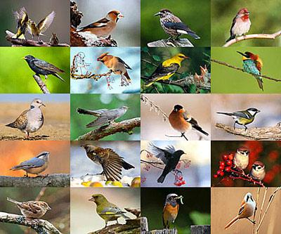 bird-pictures